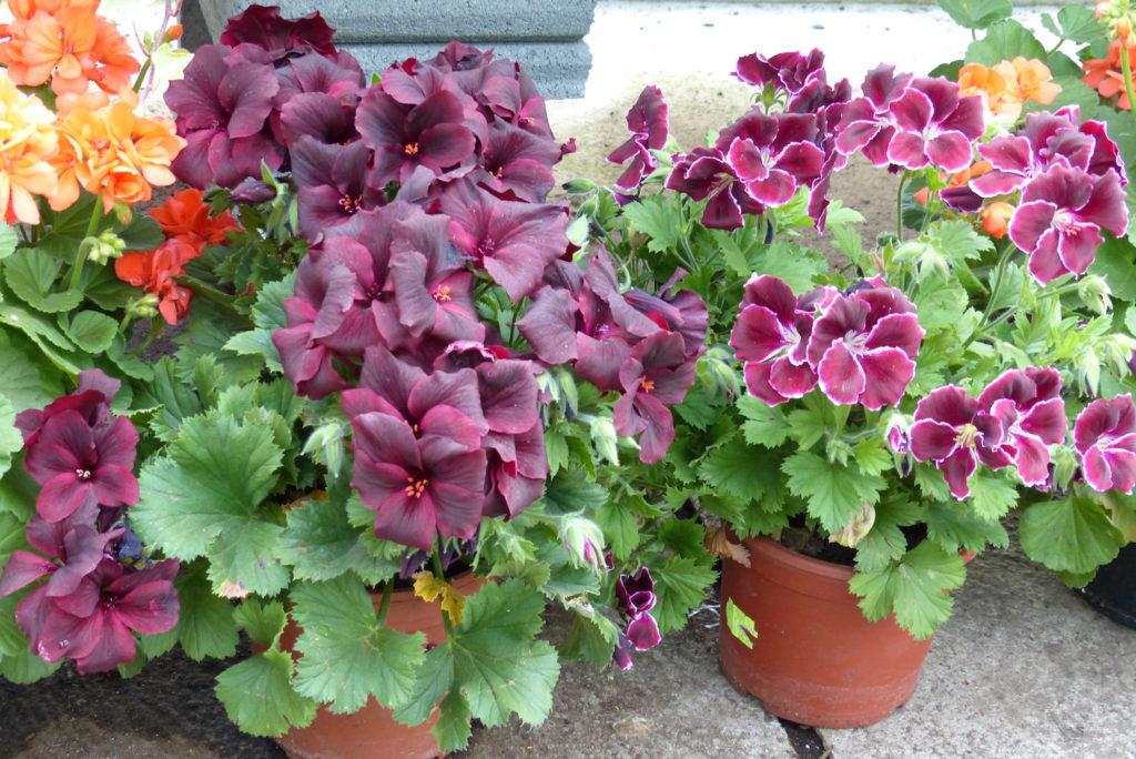 Sommer Gartnerei Masetti Ihre Ansprechpartner Zum Thema Blumen